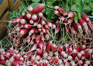 Аграрная Украина должна думать не только о зарубежных, но и о внутренних рынках