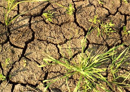 Кому і чому бракує води на Херсонщині?