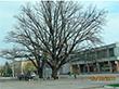 Уважаемые деревья Херсонщины