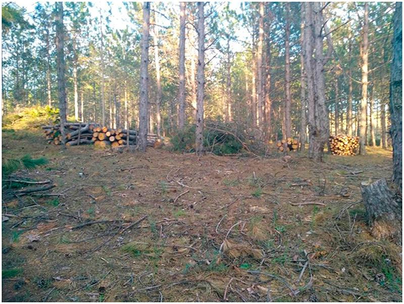 Поліція перевіряє інформацію щодо знищення лісу на Херсонщині