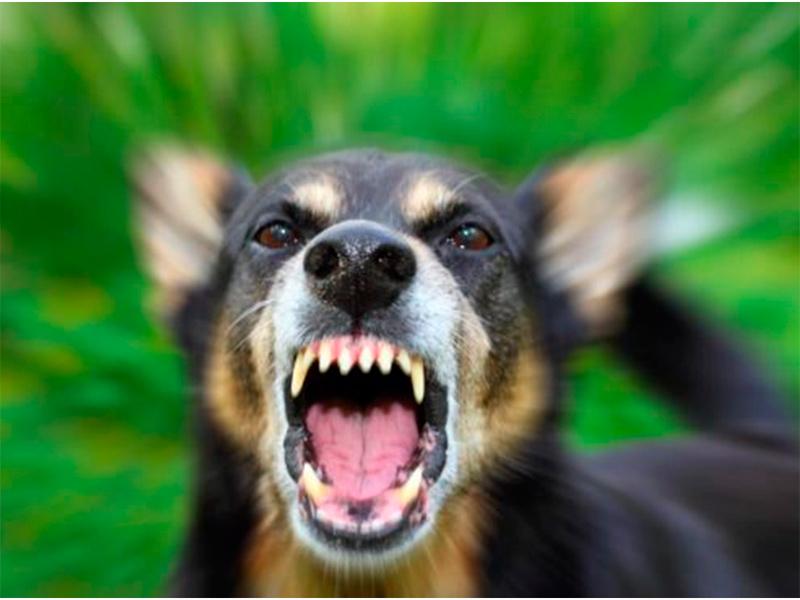 Злобный пес в Херсоне атакует малышей