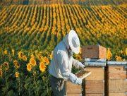 В Херсонской области зарегистрировано более полутора тысяч пасек