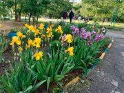 Херсон заполонили веселкові квіти