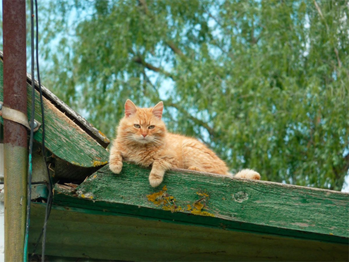 Под Херсоном в днепровских плавнях завелся кот, который живет на крыше