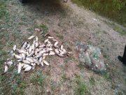 В Херсонской области рыбпатруль за неделю выявил 95 нарушений