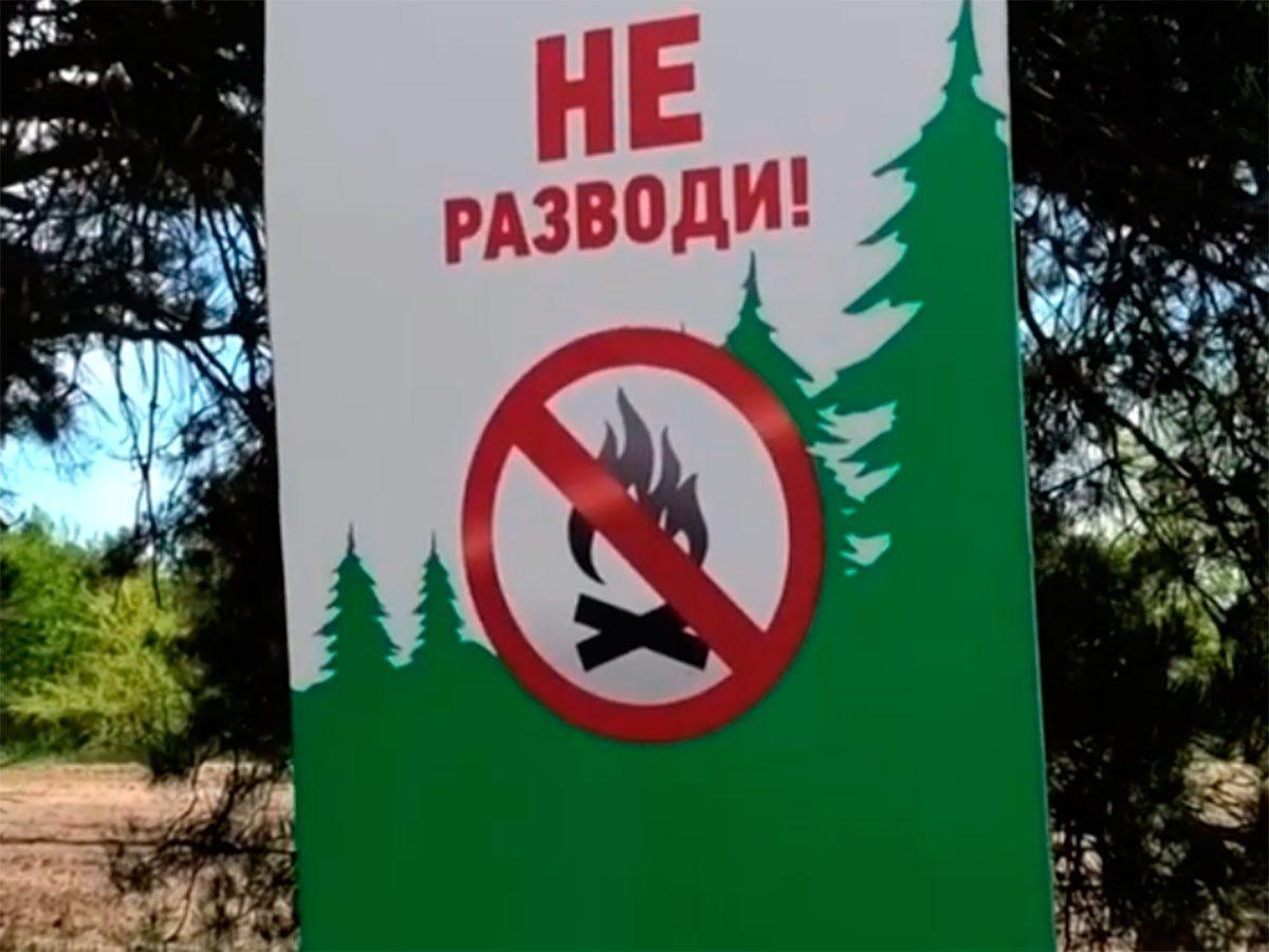 Олешківський ліс, відео, відпочинок