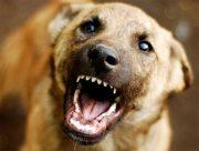 На Херсонщине дворовый пес покусал маленькую девочку