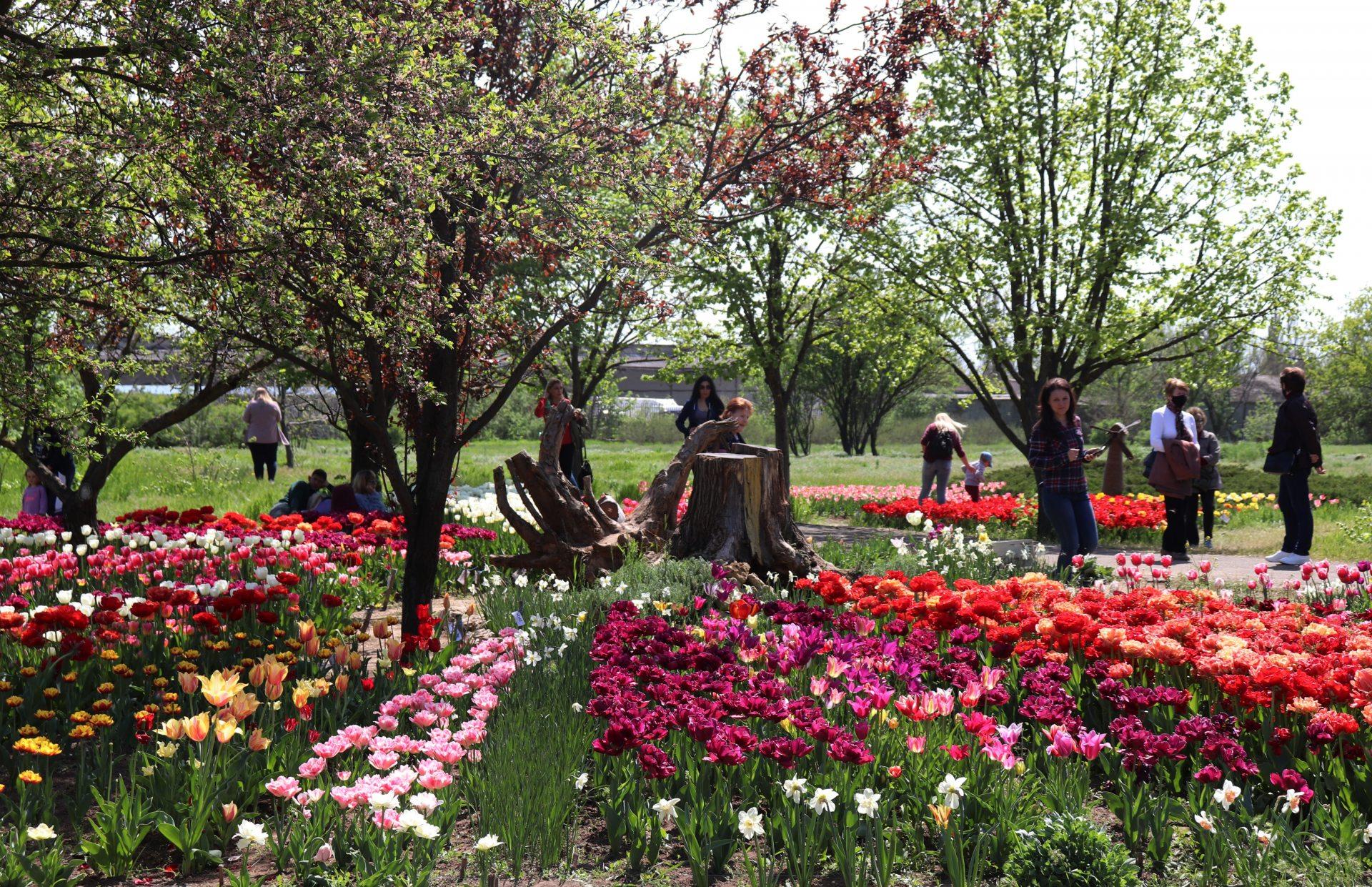 ботанічний сад, ХДУ, квіти