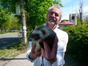 По Херсону гуляют с экзотическими животными
