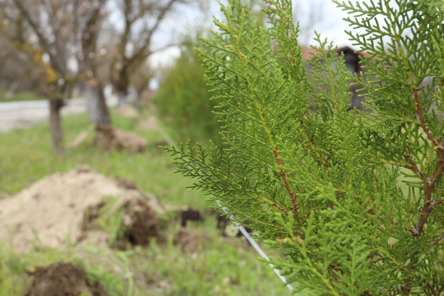 традиція, заклали дерева, лісівники