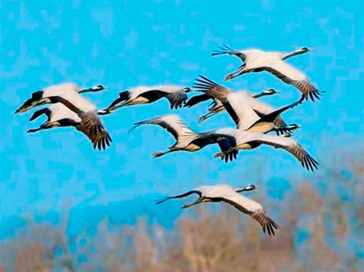 Присивашье, птицы, Яновский