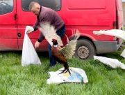 На Херсонщині дбають про розмноження дикої птиці
