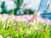 На Херсонщині екологія одна з найкращих в країні
