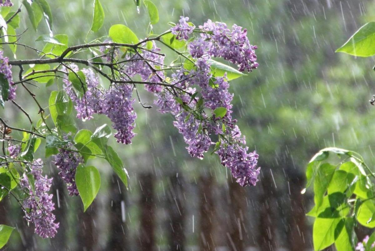 дощі, грози, погода