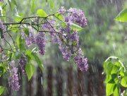 До України йдуть дощі та грози