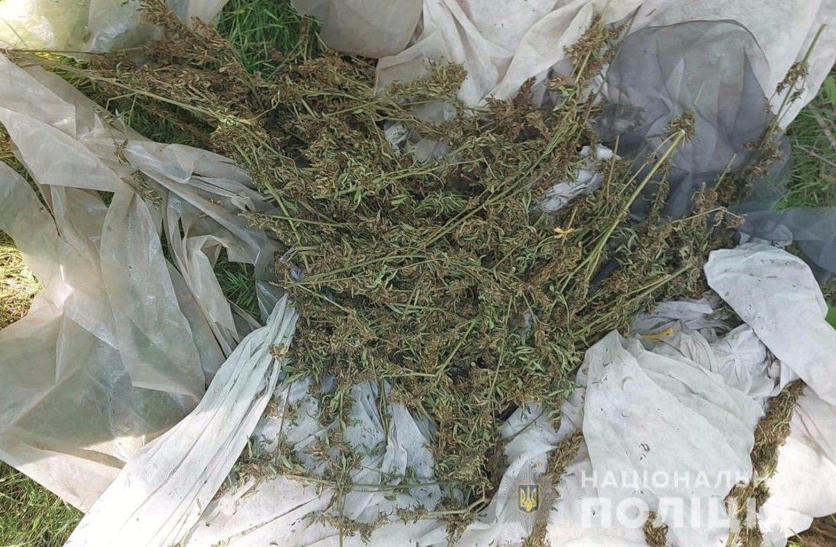 Олешковский район,марихуана,конопля,каннабис