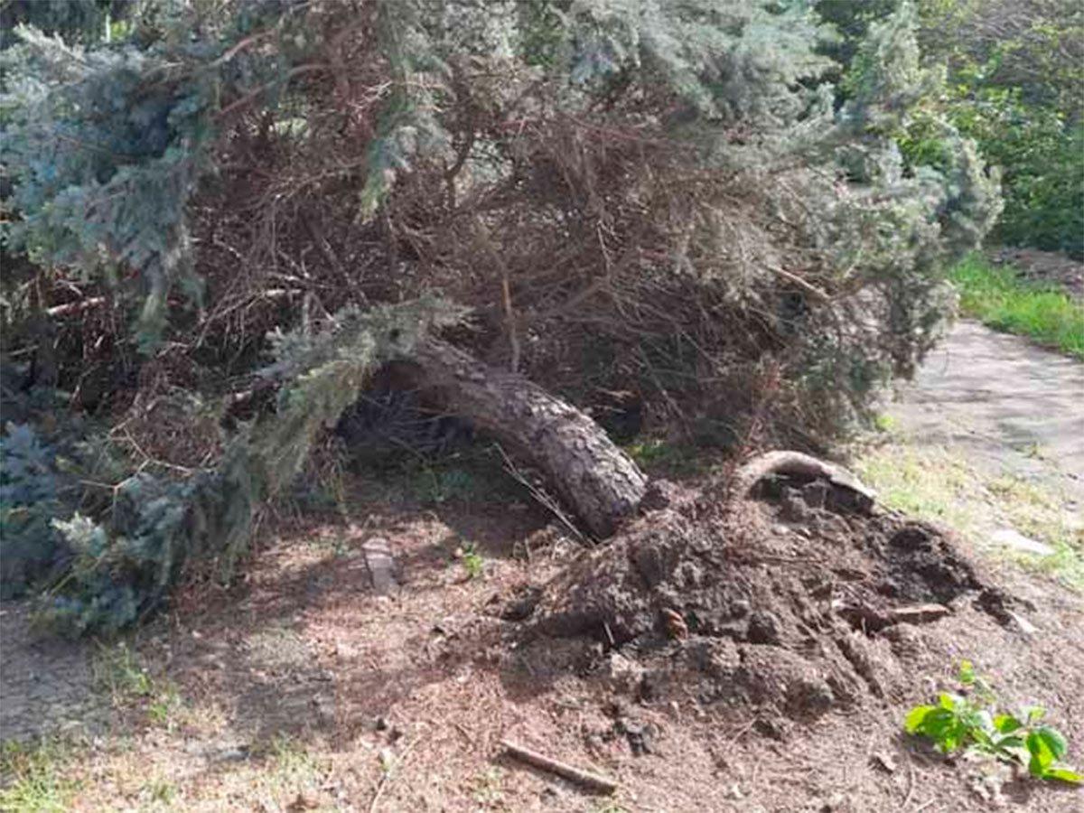 Асканія-Нова, деревопад, Яновський