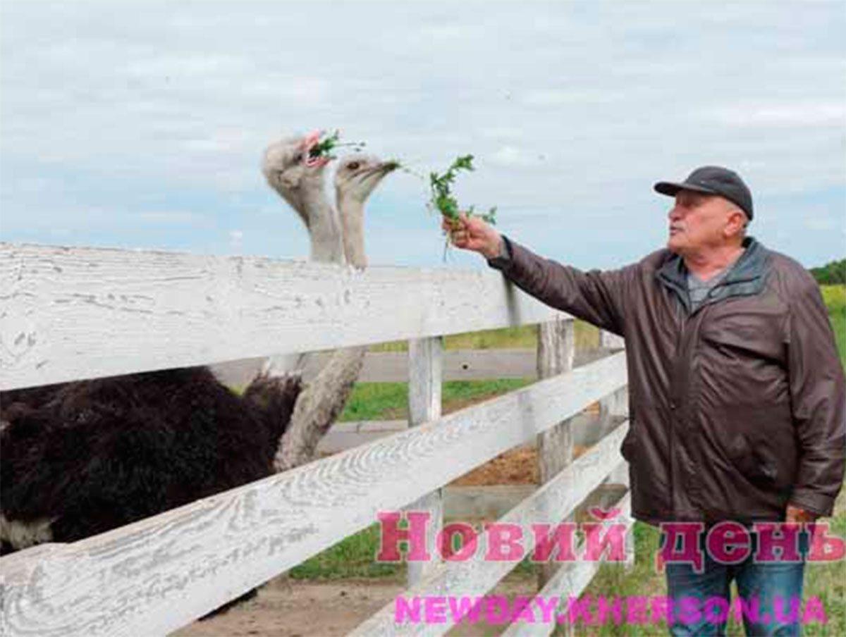 Бехтери, страусова ферма, Яновський