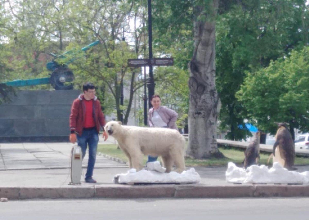 музей, день музеев, белый медведь, пингвины