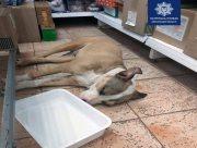 Херсонца привлекли к ответственности за издевательства над собакой