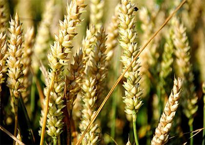 В Украине началось обсуждение проекта Концепции развития агрострахового рынка