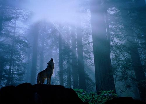 Отчего в херсонском Гидропарке волки воют?