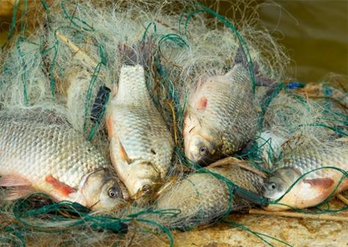 С браконьеров Херсонщины причитается треть миллиона гривень