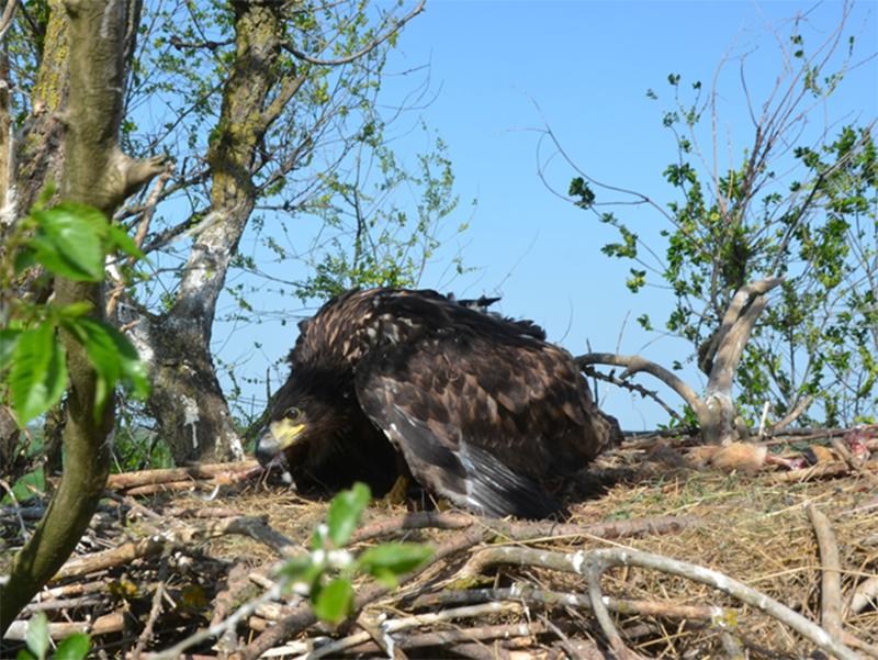 Вывести птенцов на Херсонщине редчайшим птицам помешали люди