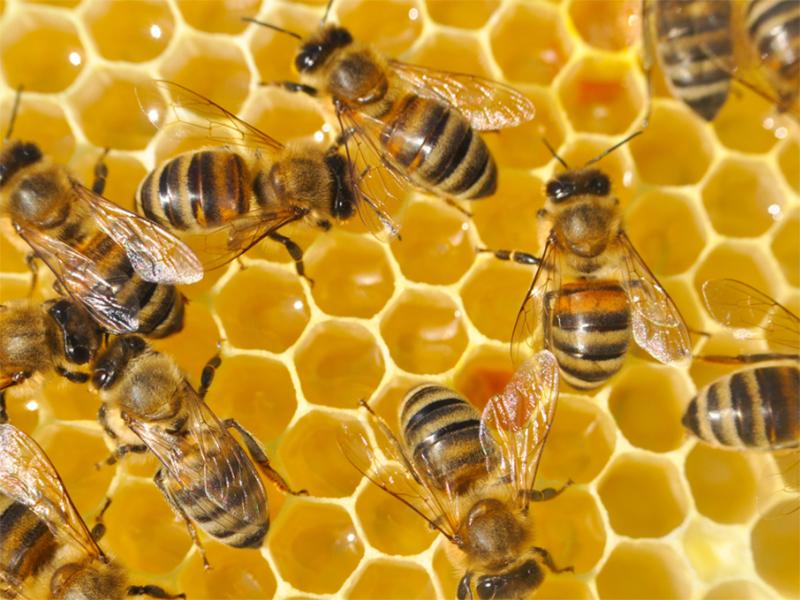 Більше бджіл і меду на Херсонщині