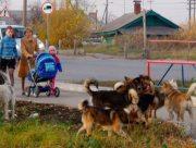 Бродячие псы нападают на детей в Олешках