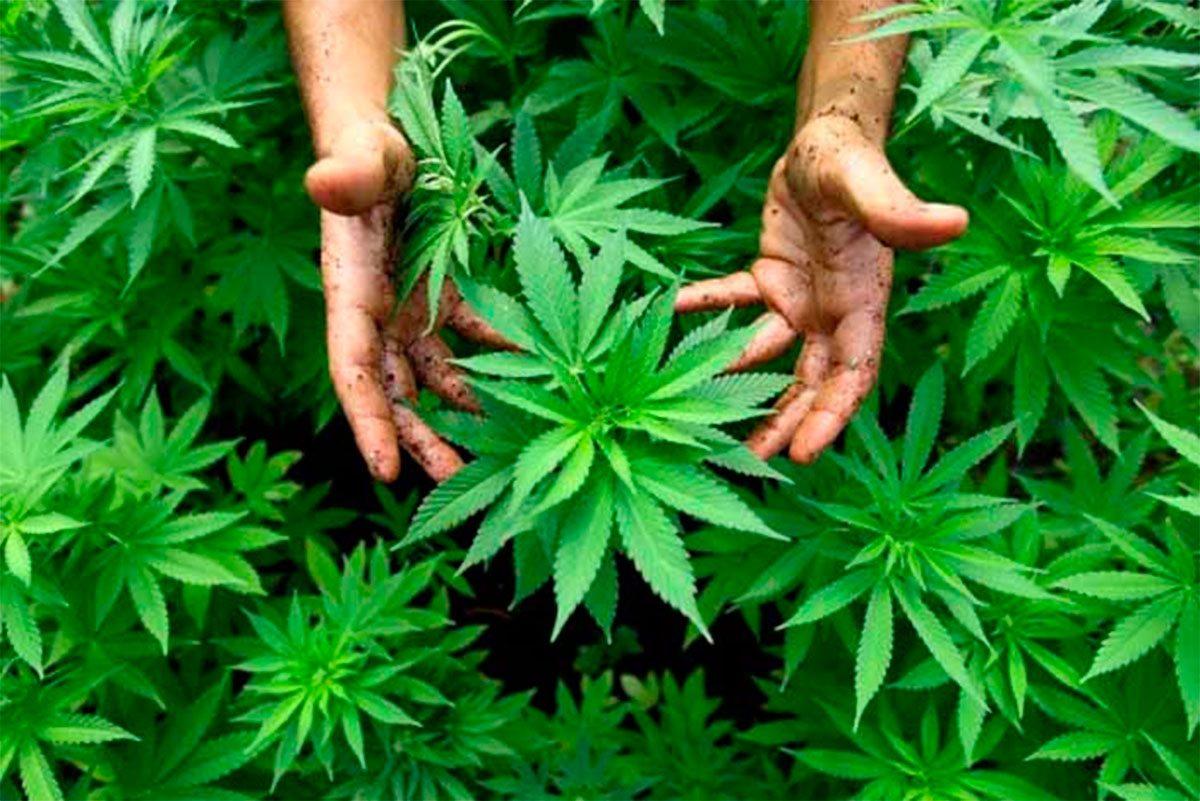 На Херсонщине уничтожили посевы наркотиков