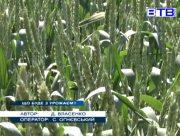 На Херсонщині гинуть посіви