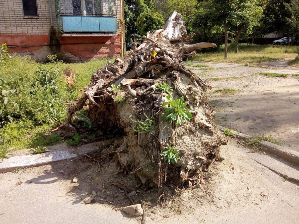 Памятник дереву в Херсоне