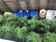 Прибавка к пенсии: пожилой каховчанин выращивал коноплю прямо на балконе