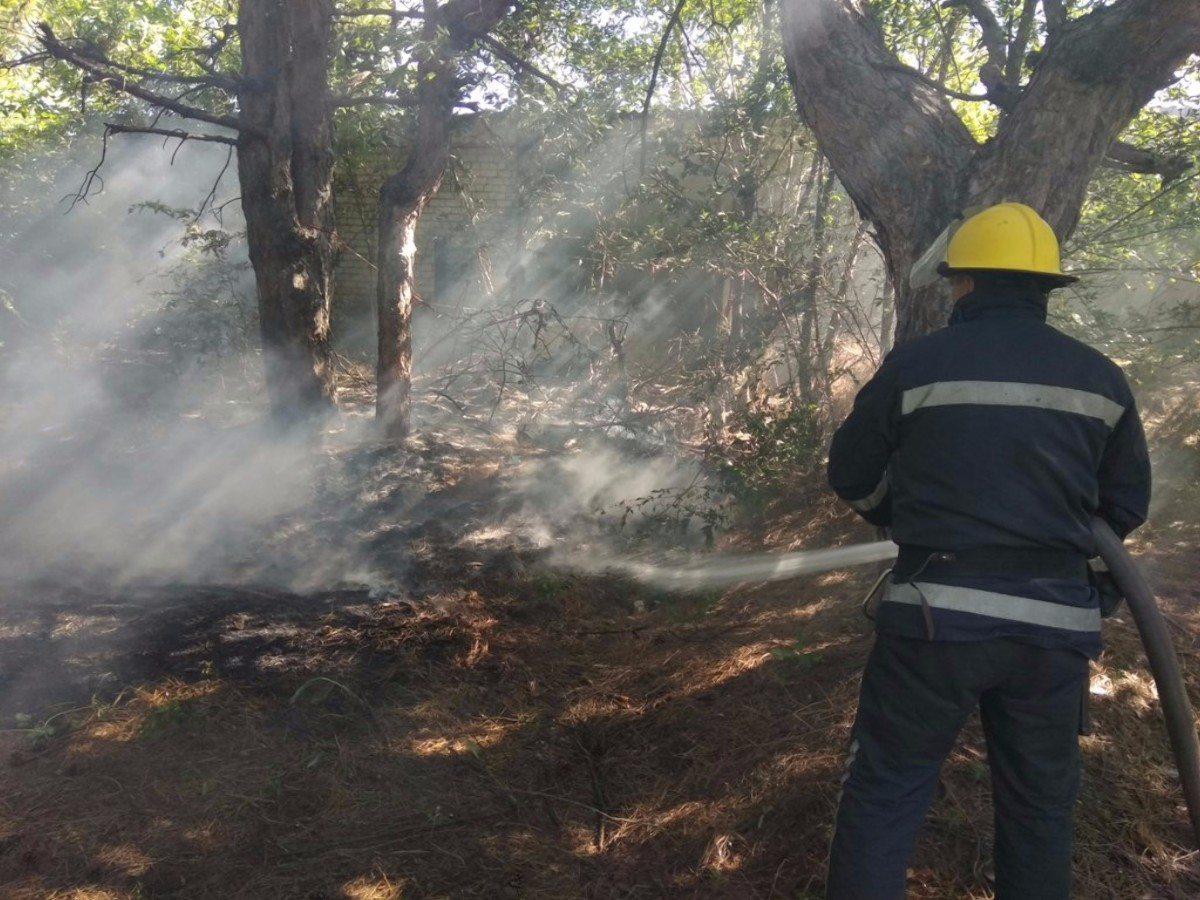 На Херсонщине горел лес