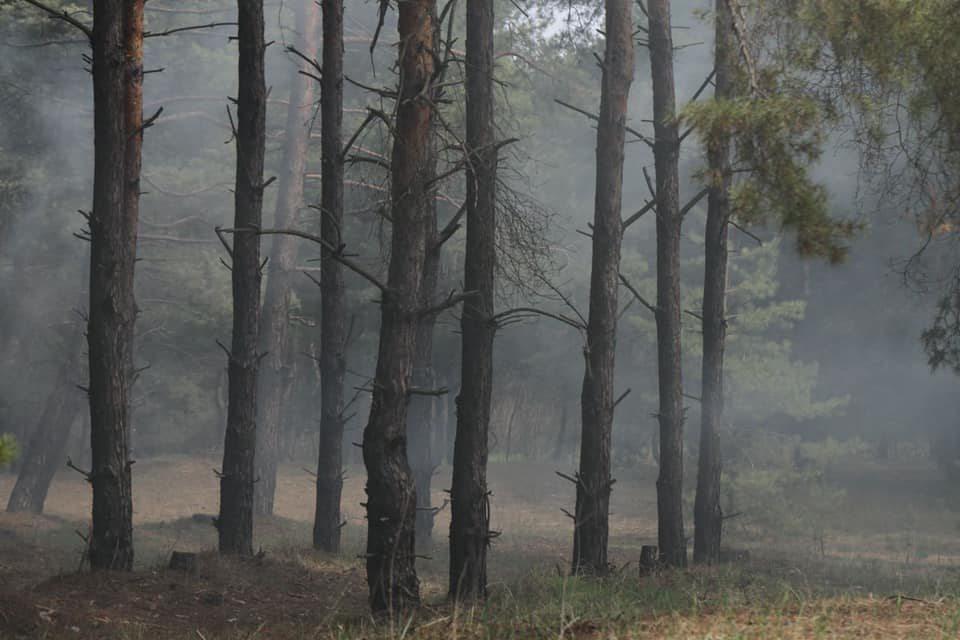 лісівники, громадяни, пожежа