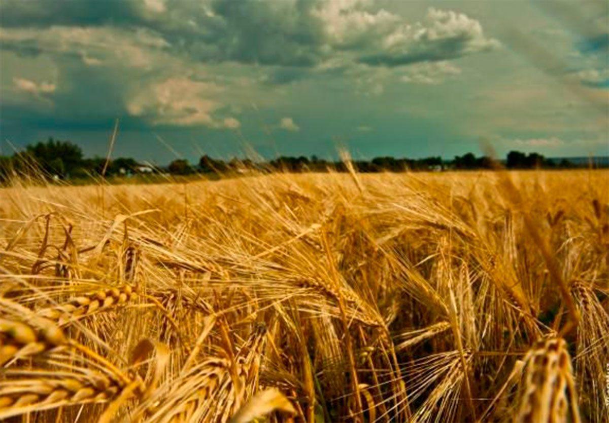 Херсонщин, жнива, врожай