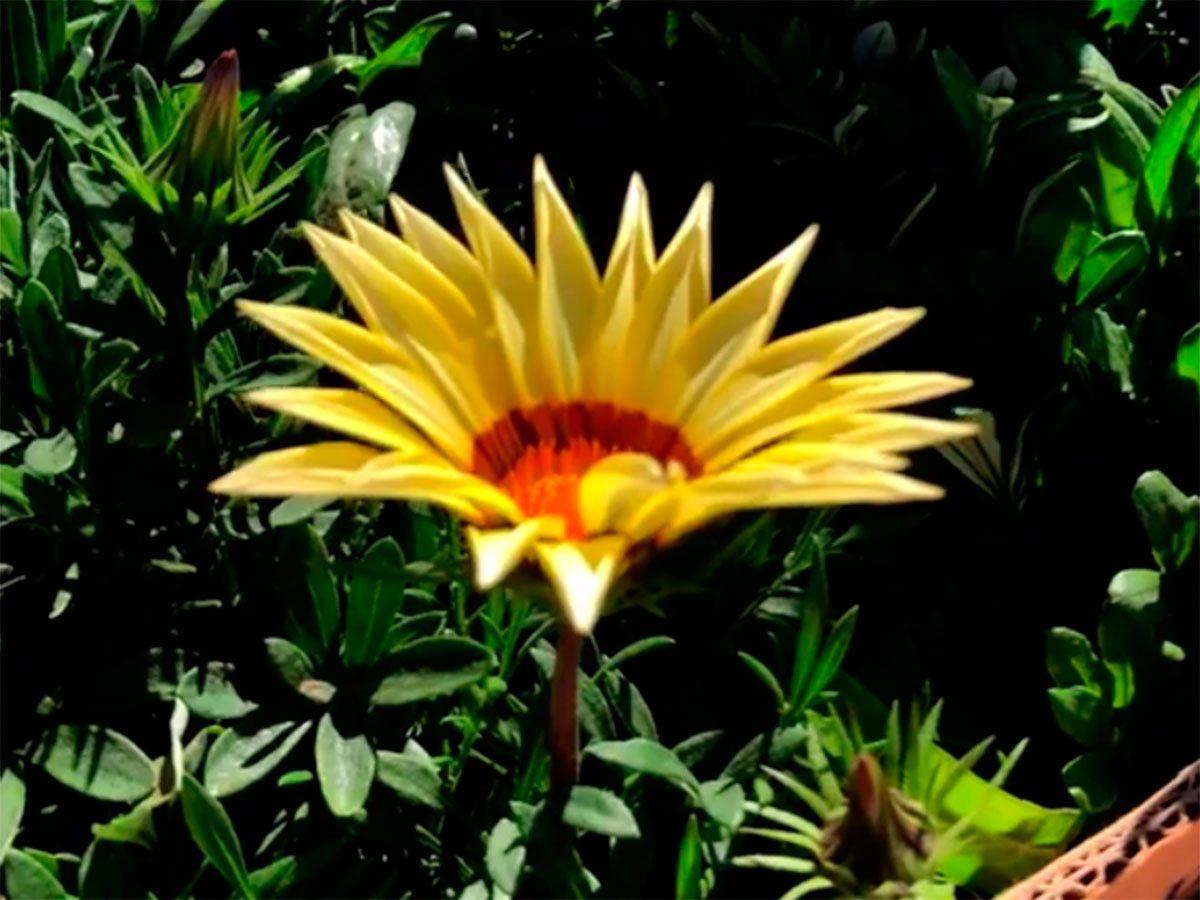 Херсон, відео, рослини