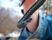 Херсонец от укуса змеи лечился водкой