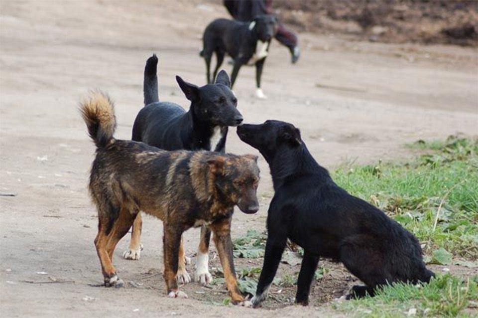 собаки, слушания, Новая Каховка