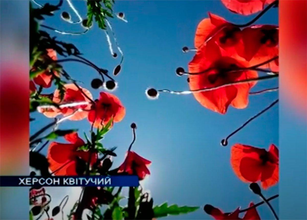 Херсон, відео, квіти