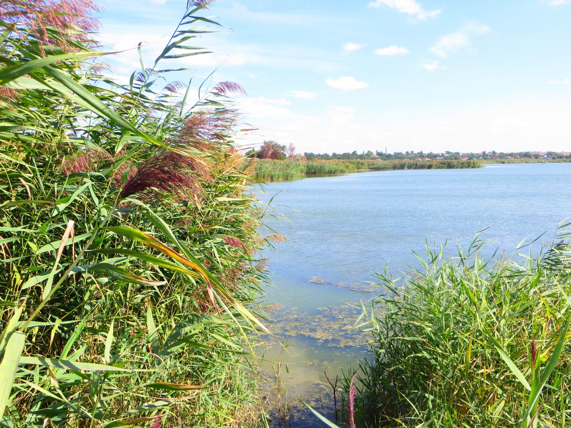 """""""Білий смуток"""" озера та річки на Херсонщині"""