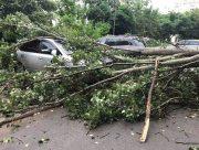 В центре Херсона два упавших дерева повредили автомобили