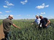 На Херсонщині рисоводи  ловлять сонце