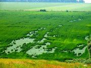 Аграрии Херсонщины опасаются потерять урожай