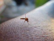 На Херсонщине мужчина пострадал в борьбе с комарами