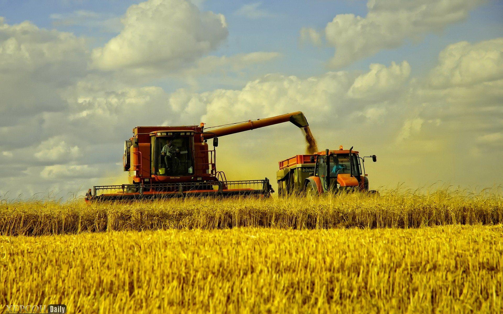 урожайность, горох, пшеница, зерновые