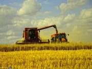 Больше гороха, меньше пшеницы собирают на Херсонщине