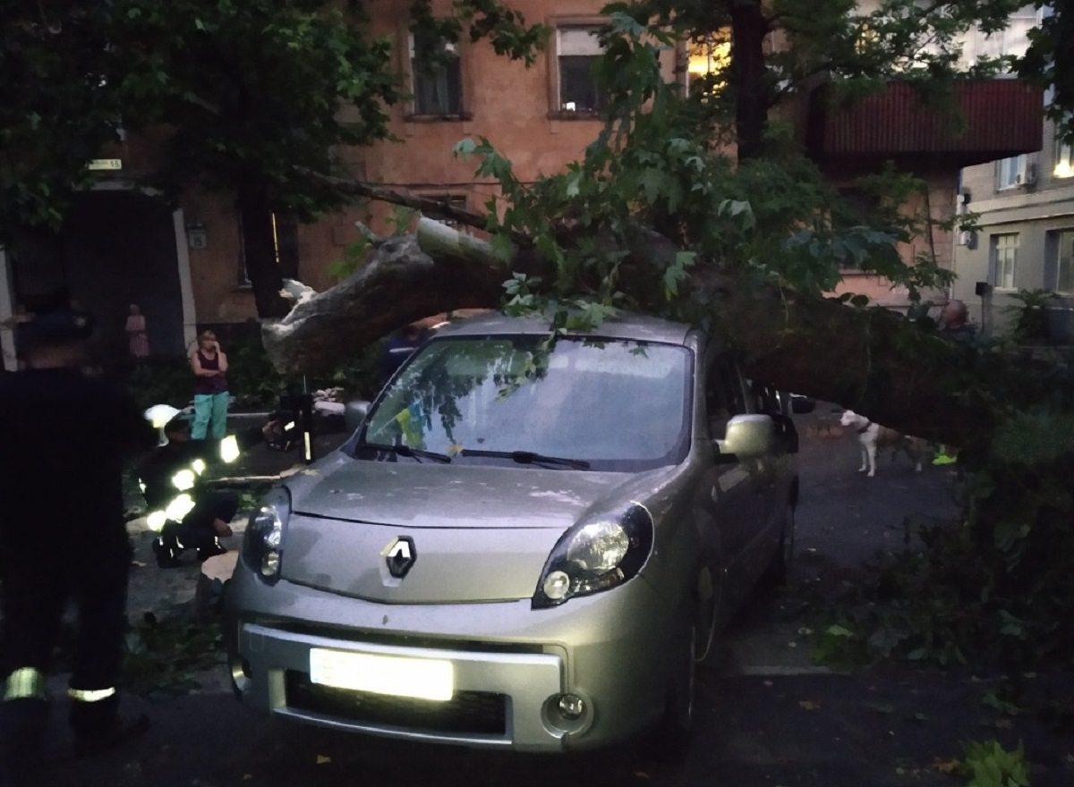 В Херсоне рухнувшее от шквала дерево разбило два автомобиля