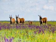 На заповедном острове Бирючий в Херсонской области проведут отстрел животных